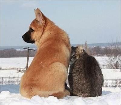 猫狗是天生不合?正确原因必知